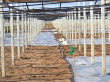 Application of fumigants in greenhouses