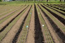 Pre-emergence herbicide