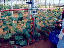 Destiny of products in the soil