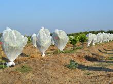 Effects on beneficial insects in the field