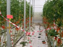 New products for soilless crops