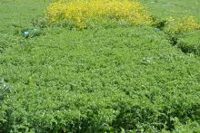 New selective herbicides